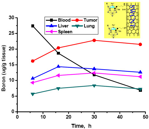 Boron tissue distributions of a BNCT compound incorporating a substituted carborane cage appended to a single‐walled carbon nanotube